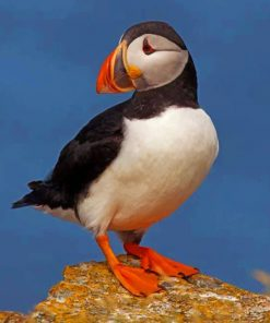 cute-atlantic-puffin-bird-paint-by-numbers