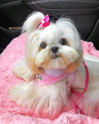 cute-shih-tzu-paint-by-numbers-1