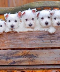 Cute westie puppies paint by numbers