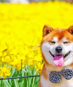 Shiba Inu Dog Paint by numbers