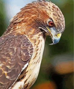 hawk-bird-animal-paint-by-numbers