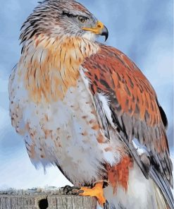 hawk-bird-paint-by-numbers