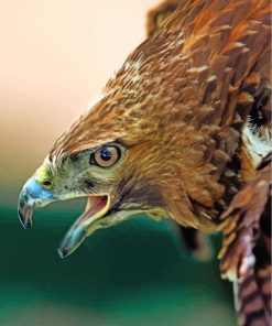 hawk-eagle-birds-paint-by-numbers