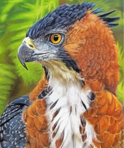 hawk-eagle-paint-by-numbers