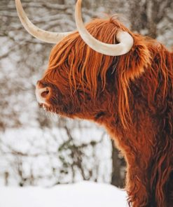 highland-cow-in-the-snow-paint-by-number