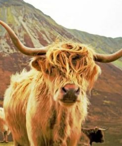 highland-cow-on-mountain-paint-by-number-510x407-1