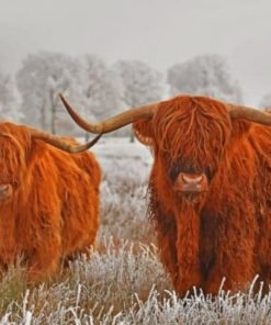 highland-cows-paint-by-number-510x407-1