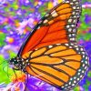 monarch-butterfly-paint-by-numbers-510x639-1