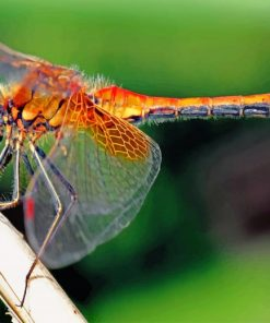 orange-dragonfly-paint-by-numbers