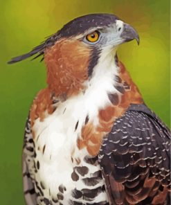 ornate-hawk-eagle-paint-by-numbers