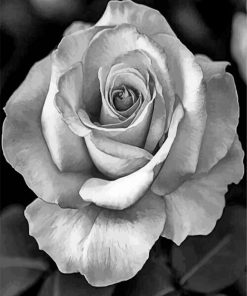 realistic-roses-black-and-white-paint-by-number