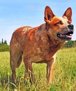 red-heeler-dog-paint-by-number