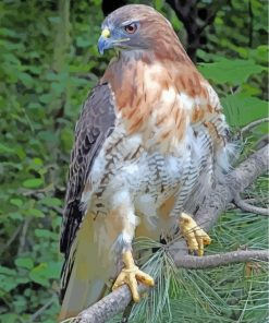 red-tailed-hawk-paint-by-numbers