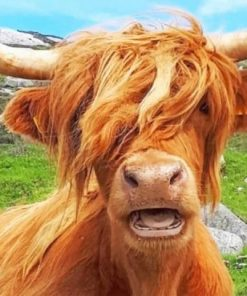 scottish-highland-cow-paint-by-numbers-510x407-1
