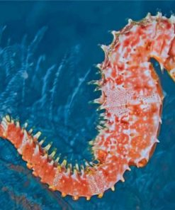 Seahorse Paint by numbers