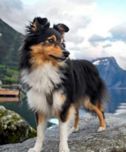 Sheltie Dog Animal Paint by numbers