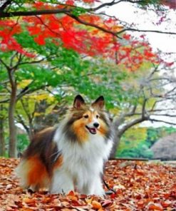 Sheltie Enjoying The Autumn Paint by numbers
