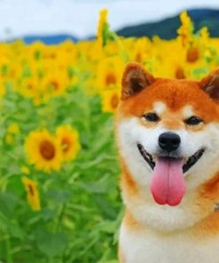 Shiba Inu In A Field Of Sunflowers Paint by numbers