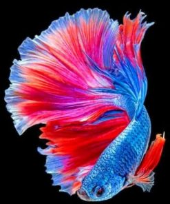 Tropical Betta Fish paint by numbers