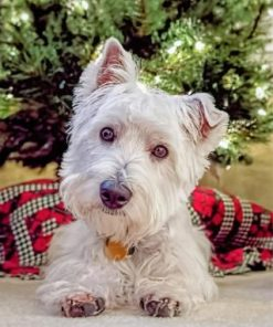 Westie Puppy Paint by numbers