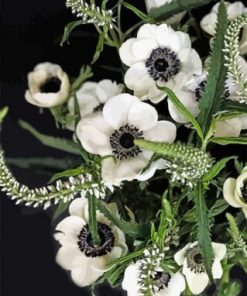 White Anemone Paint by numbers