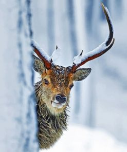 wildlife-stag-paint-by-number