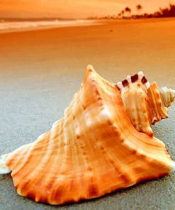 Conch Seashell paint by numbers