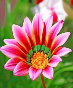 Gazania-flower-paint-by-number