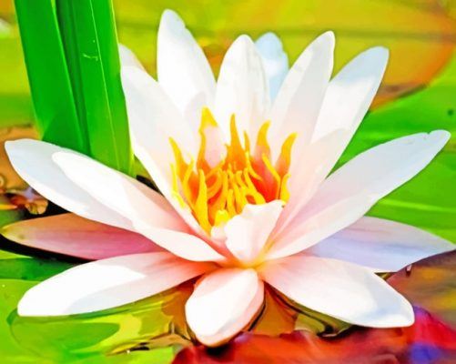 Water-Lily-Flower-paint-by-number