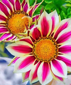 aesthetic-gazania-flowers-paint-by-numbers