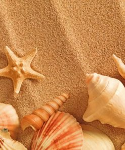 aesthetic-seashell-paint-by-number