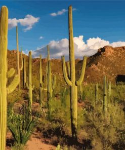 cactus in the desert tucson paint by numbers