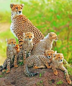 Cheetah Cubs With Mother paint by numbers