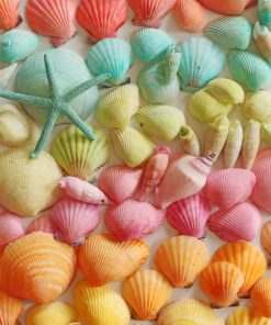 Colorful Seashell paint by numbers