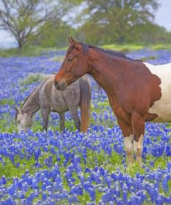 Horses And Bluebonnets paint by numbers