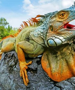 iguana-paint-by-numbers