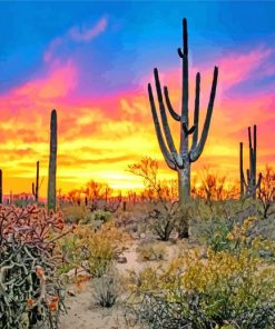 Sunset Saguaro National Park Tucson paint by numbers