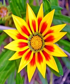 yellow-gazania-paint-by-numbers