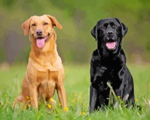 Black And Blonde Labradors paint by numbers