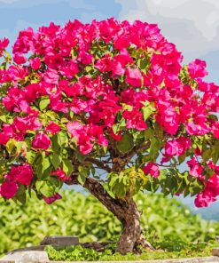 Bougainvillea Bonsai paint by numbers