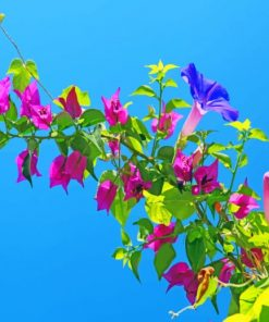 Bougainvillea paint by numbers