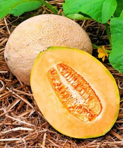 Cantaloupe fruit paint by numbers