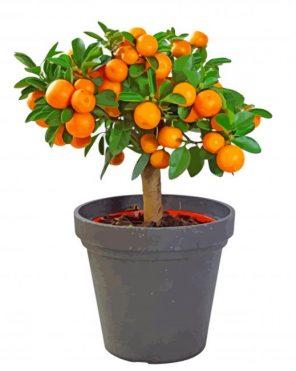Orange Tree Plant paint by numbers