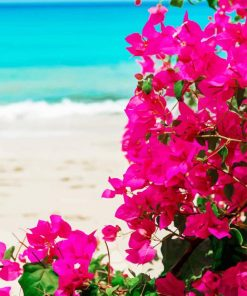 Bougainvillea Plants paint by numbers