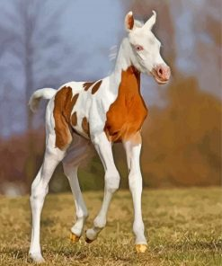 Arabian Horse Foal paint by number