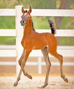 brown Foal paint by number