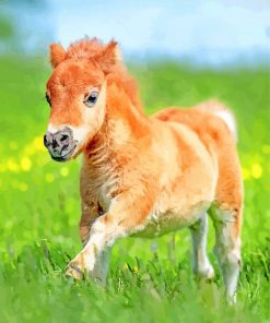 cute foal paint by number