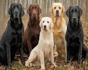 labradors Dogs paint by numbers