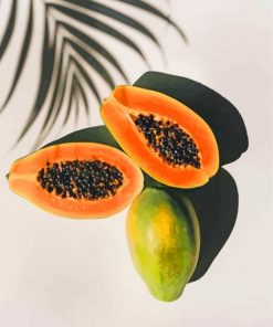 papaya fruit paint by numbers